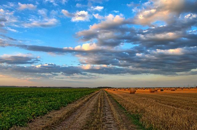 MASTER AGRICULTURA campo