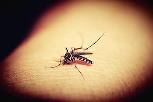 Regulación de los repelentes de insectos de uso humano